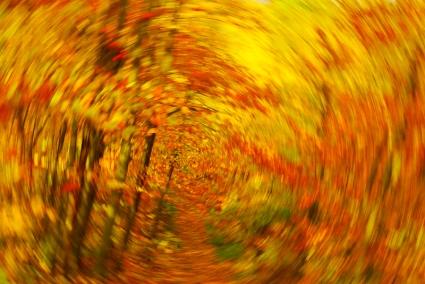 Vortex d'automne